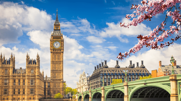 The Big Ben, the Palace of Westminster and cherry blossom branches during spring in London.