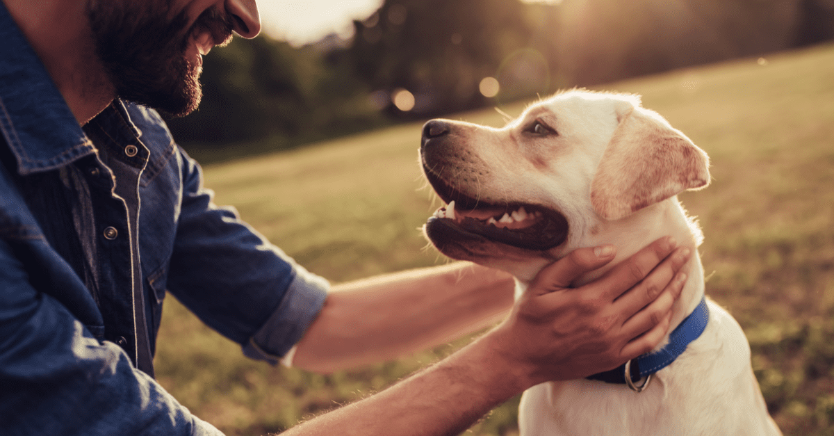 8 Best Dog Friendly Countries That Boost Pet-Friendly Travel