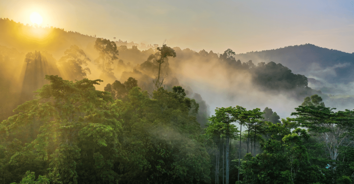 World Rainforest Day 2021: 7 Ways To Save The Earth's Oldest Living Ecosystem