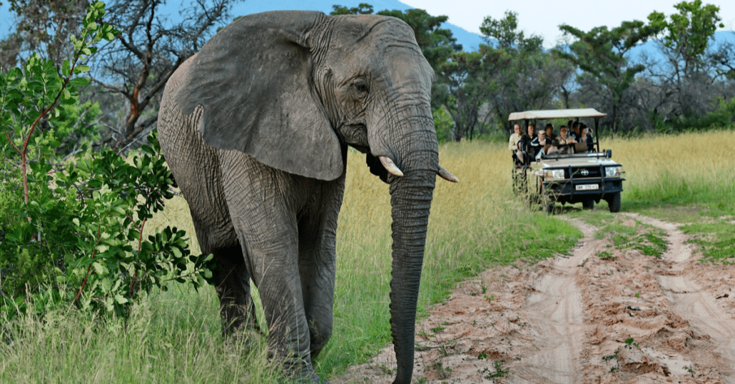 An elephant in front of a safari truck full of people.