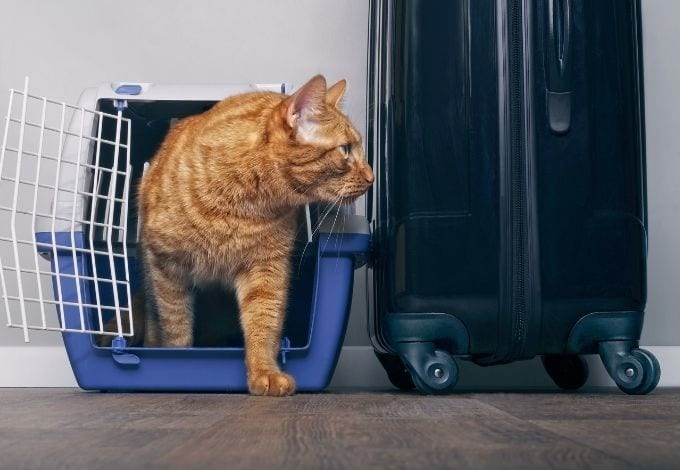 A kitten inside a blue and white pet crate next to a travel suitcase.