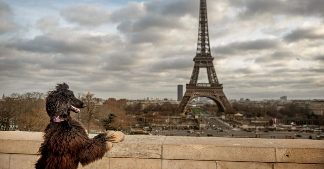 Dog looking at the Eiffel Tower on a cloudy autumn day in Paris.
