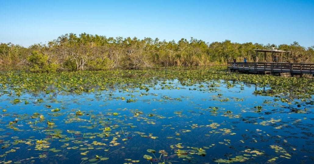 View from a lake filled with water plants at the Everglades National Park, in Florida.