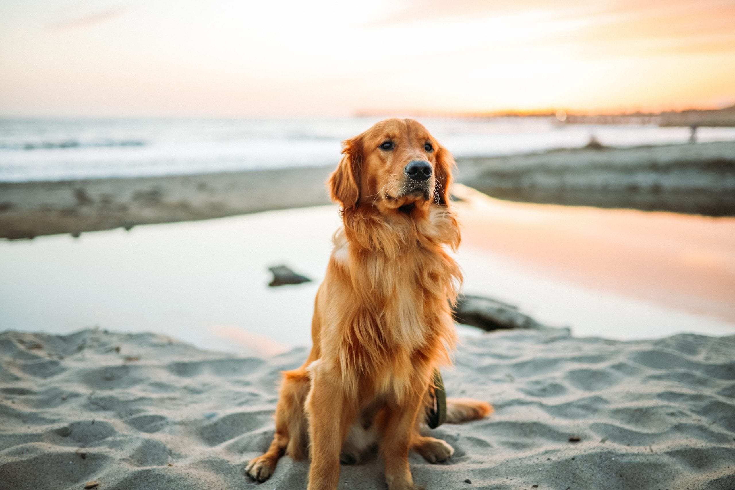 pet friendly holidays in florida