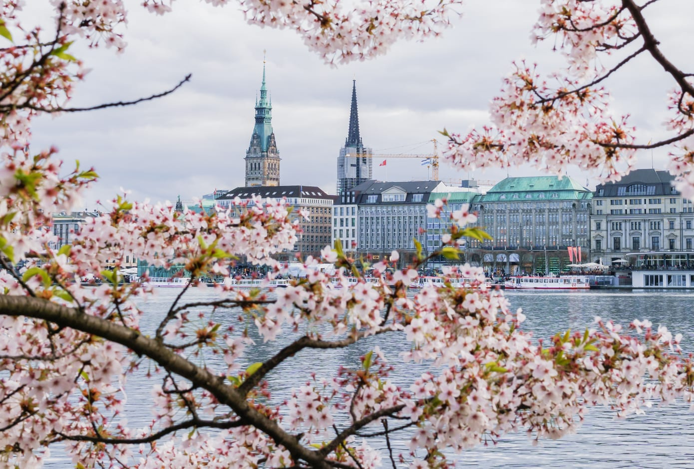 View of Hamburg townhall - Rathaus, Alster river, and a cherry blossom tree at spring day.