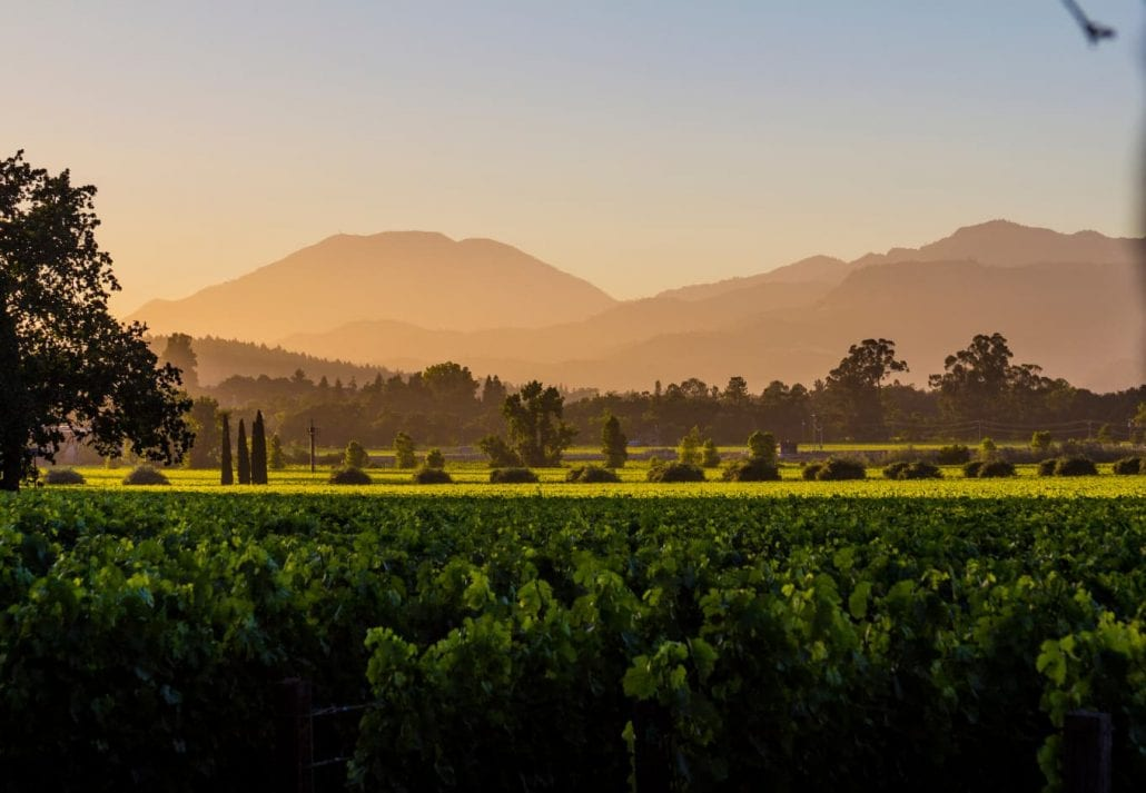 Panoramic view of Napa Valley grape plantation in the summer.