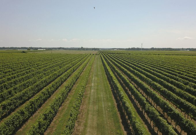 Vineyards on the North Fork of Long Island