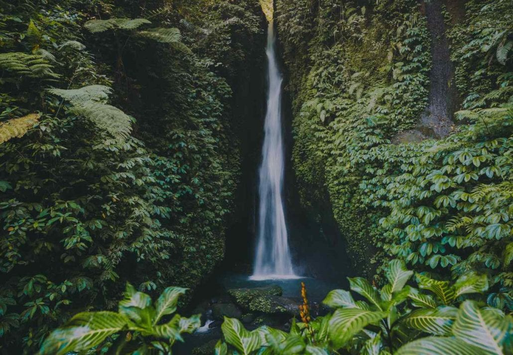 A beautiful and leafy waterfall in Costa Rica.
