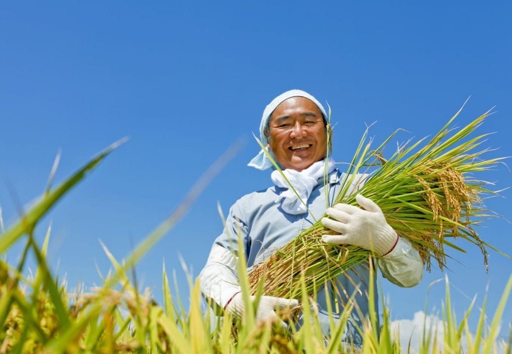 Japanese worker at a rice paddie.