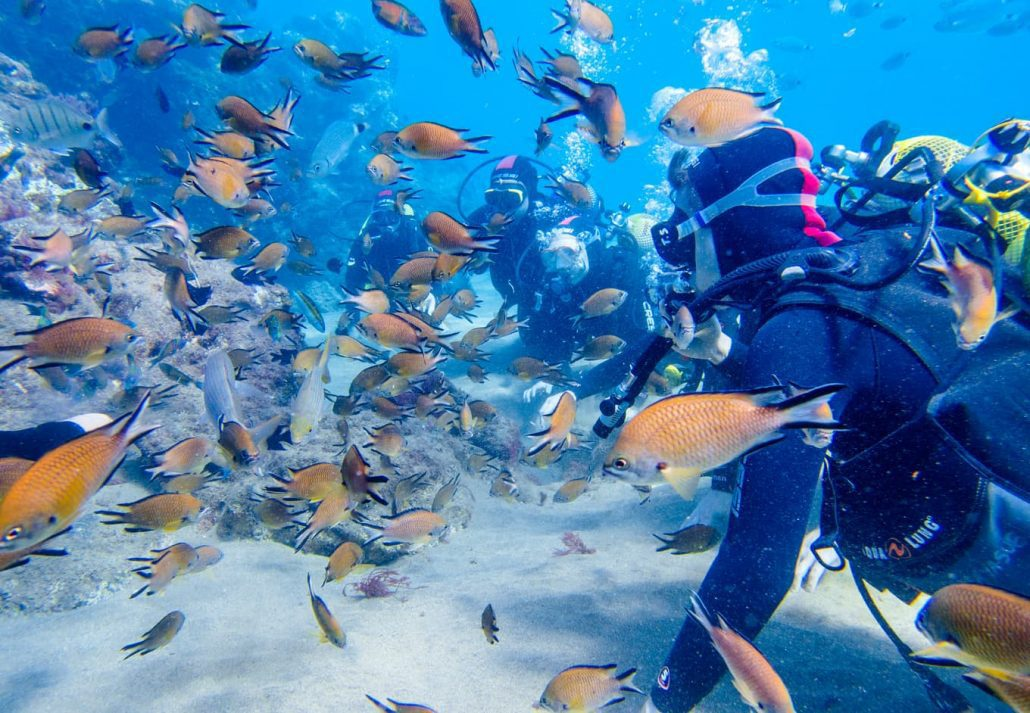 Lanzarote, Spain, Canary Island November 28th of 2018. Family enjoy underwater try dive with a lot of fish