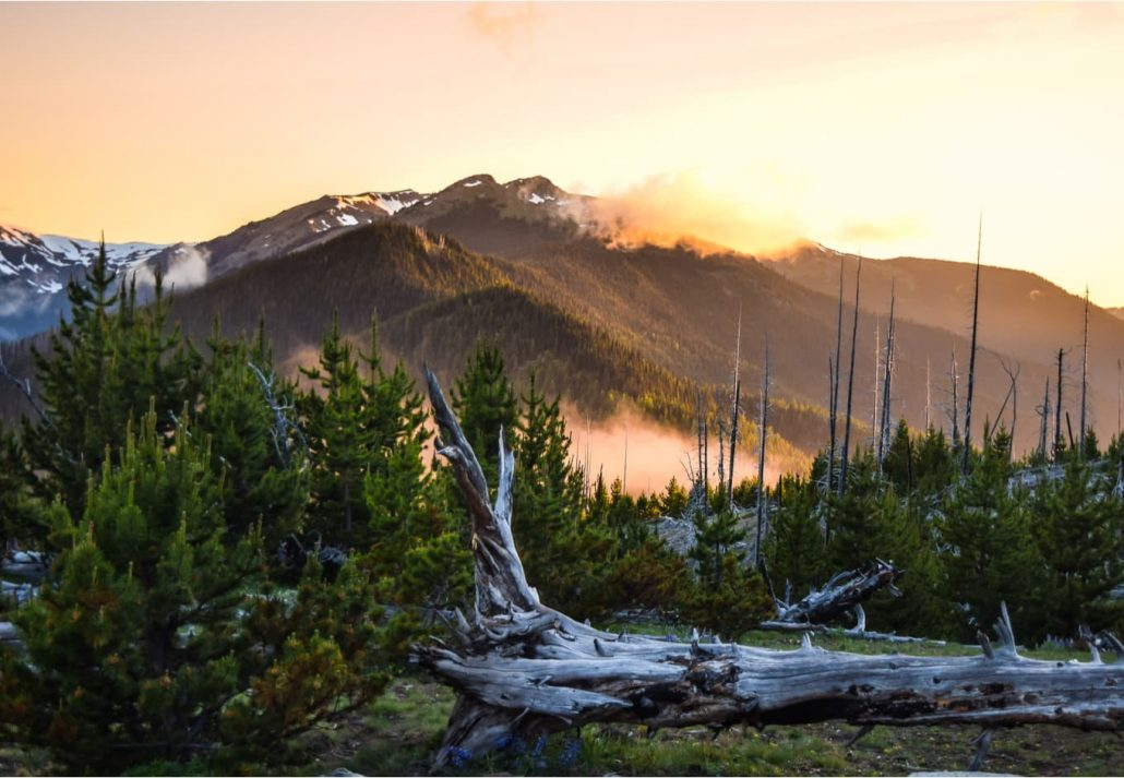 Olympic National Park in Washington State, USA